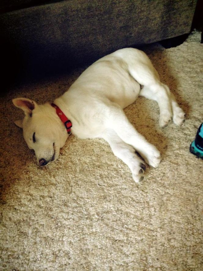 """A full day of being chased """"loved"""" by kids has worn this guy out."""