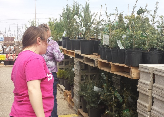 Garden center shopping  with a Master Gardener and a horticulturalist..I'll never look at a spruce tree the same again.